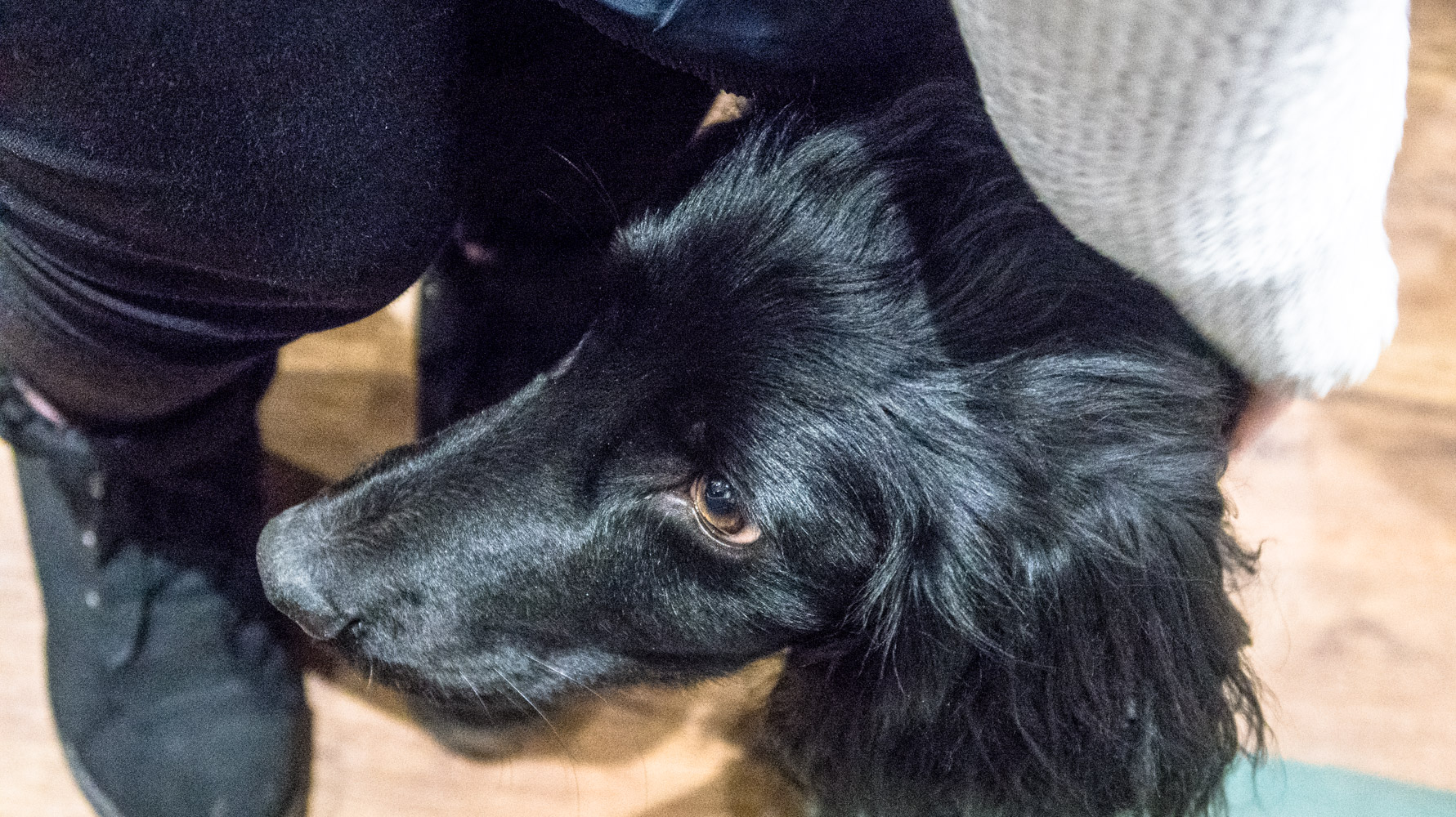 A dog named Otis attending the launch event